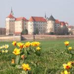Schloss Hartenfels im Visier des Frühlings