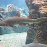 Auge in Auge mit einem Hai