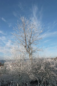 Fuchslöcher im Winter
