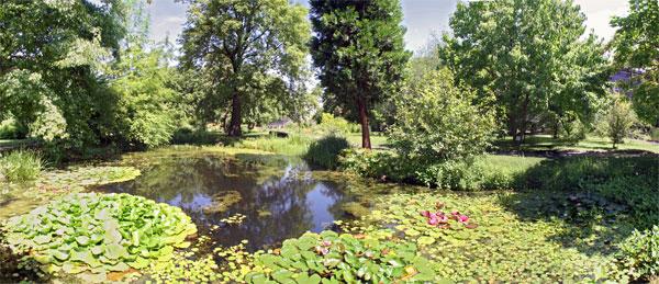 Seerosen im Botanischen Garten