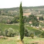 Ein Streifzug durch die Toskana
