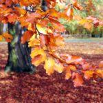 Faszinierende Herbstfarben
