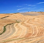 Feld in der Toskana