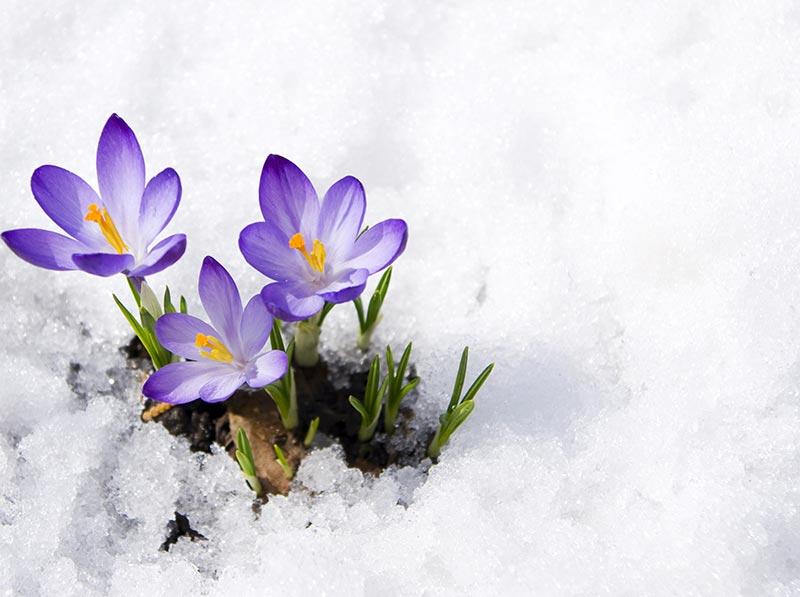 ostern-im-schnee