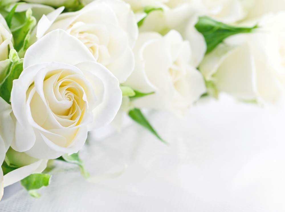 Weisse Rosen zur Hochzeit